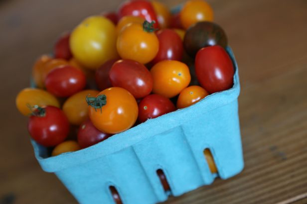 Medley of gourmet tomatoes