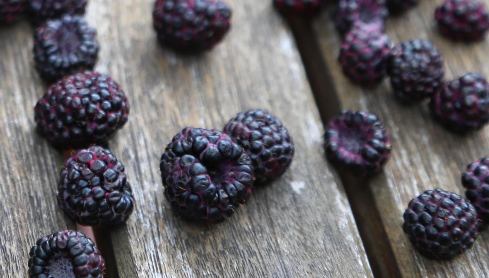 blackraspberries4