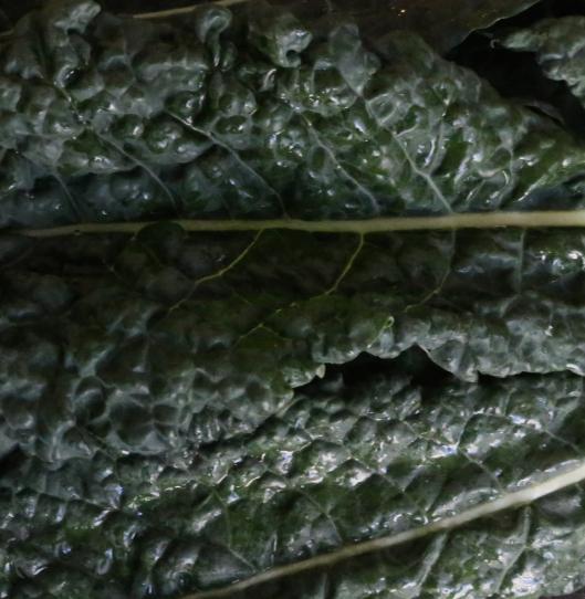Lacinto kale (also known as Dinosaur kale or Tuscan kale)