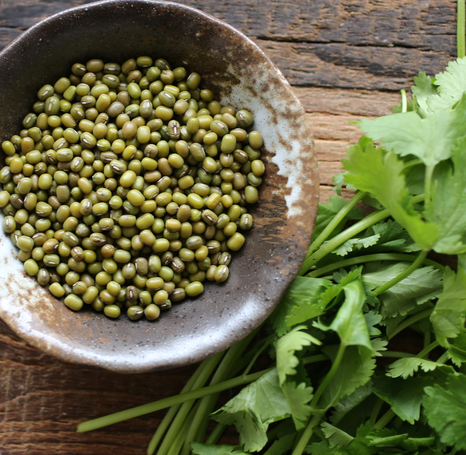 mung beans Mung beans present the greatest challenges for the home sprouter, but they are very fun to grow sprouts,sprouts,sprouts,sprouts,sprouts organic mung bean sprouts.